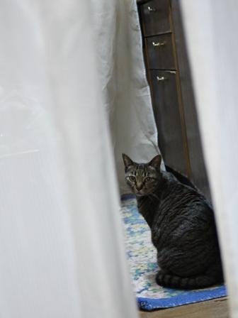 猫のお友だち ちびちゃん編。_a0143140_22224294.jpg