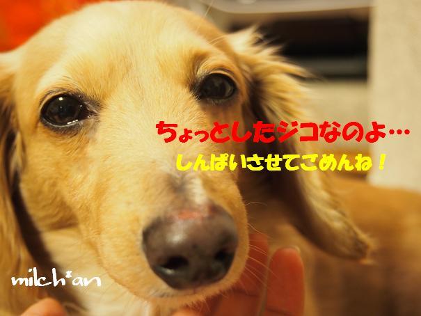 b0115642_2148593.jpg
