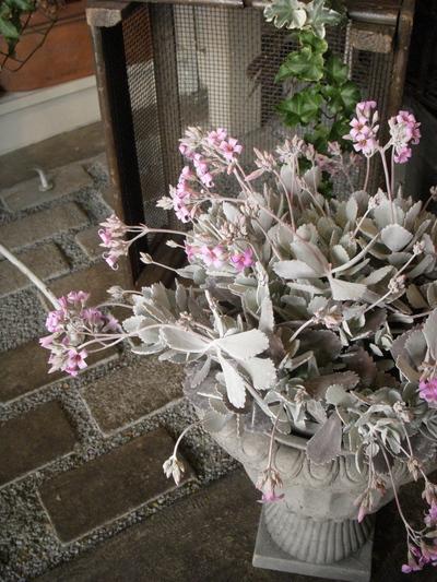 plants 。。。_a0229658_0532486.jpg