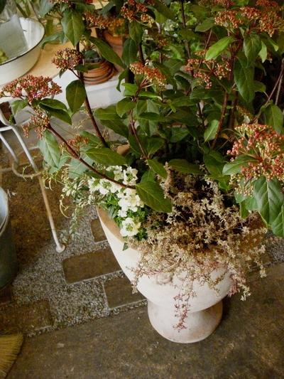 plants 。。。_a0229658_127415.jpg