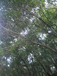自然栽培_e0081959_1659397.jpg