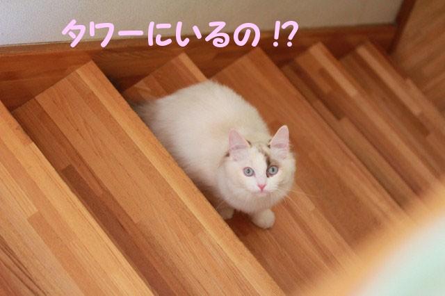 a0285571_20113654.jpg