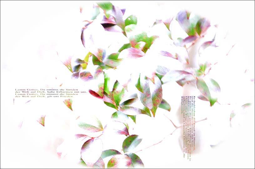 f0198771_00553.jpg