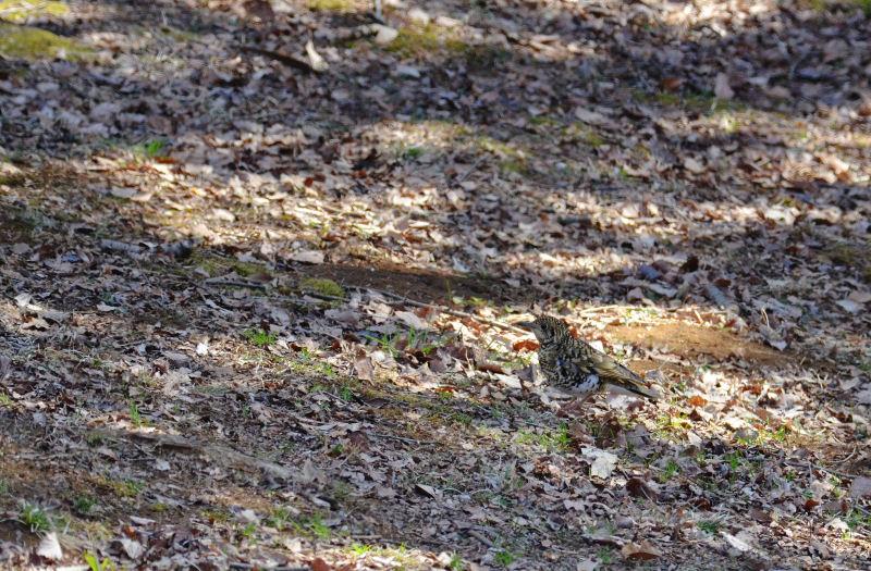 2月下旬 木の葉隠れ・・と、多勢に無勢。_b0078795_1958946.jpg