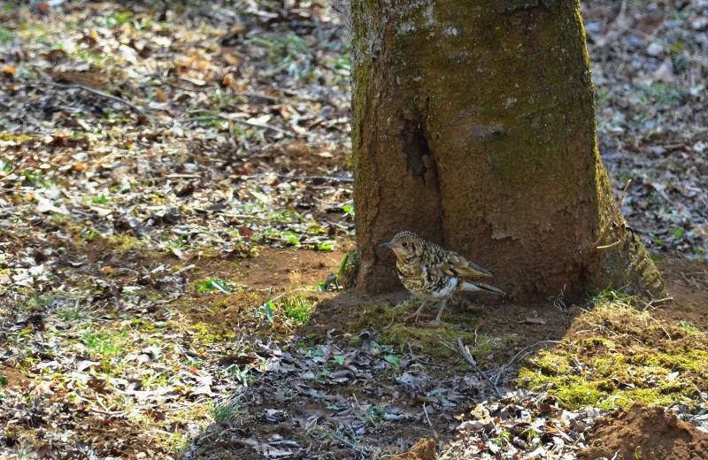 2月下旬 木の葉隠れ・・と、多勢に無勢。_b0078795_2013460.jpg