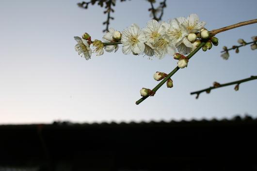 富春館の庭_c0256701_7205651.jpg