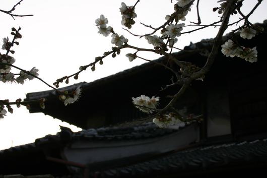 富春館の庭_c0256701_7363779.jpg