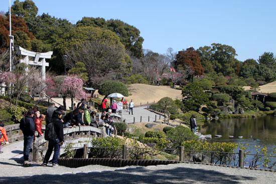 熊本で梅を愛でる1 水前寺公園_e0048413_19101564.jpg