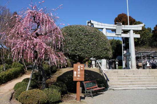 熊本で梅を愛でる1 水前寺公園_e0048413_19103157.jpg