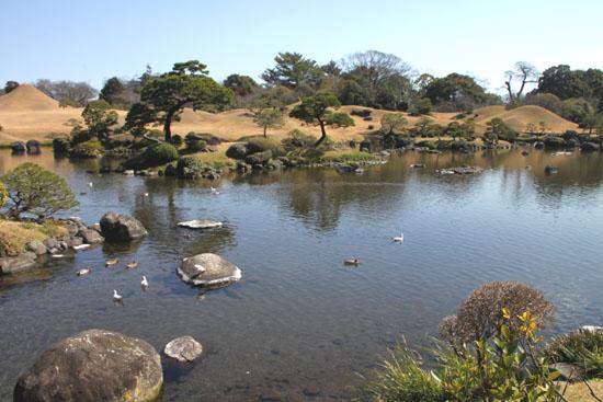 熊本で梅を愛でる1 水前寺公園_e0048413_19104340.jpg