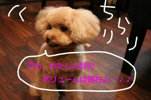 こんばんは!!!_b0130018_14113027.jpg