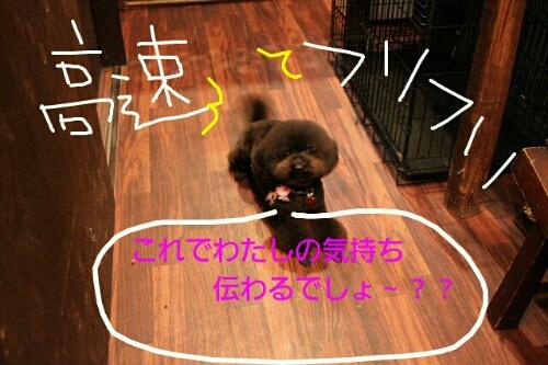 こんばんは!!!_b0130018_147721.jpg