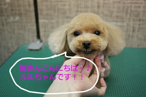 こんばんは!!!_b0130018_14933100.jpg