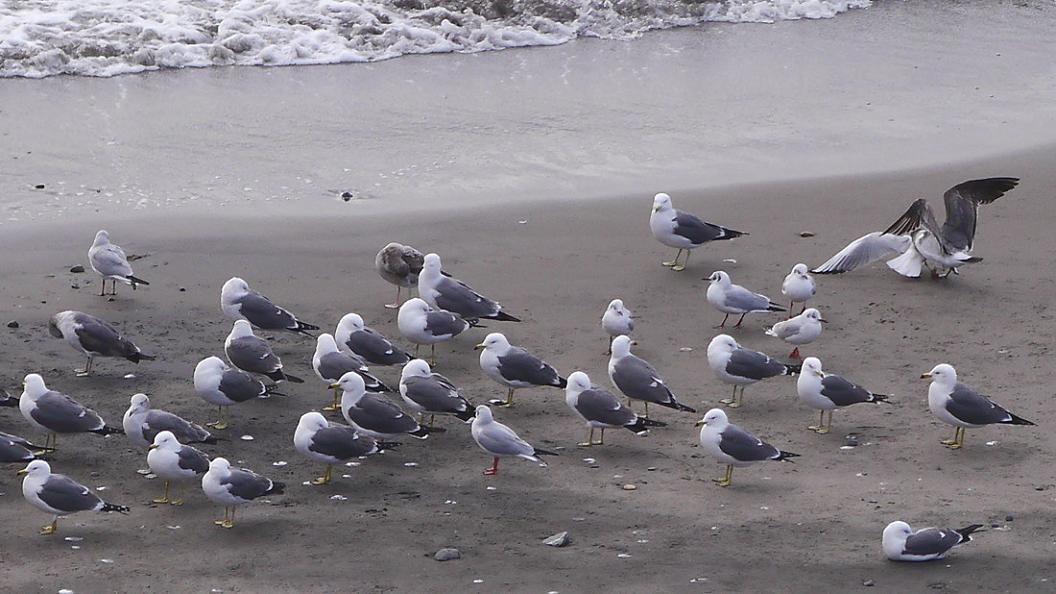 今 日 の 浜 辺 No.42_d0039021_18321828.jpg
