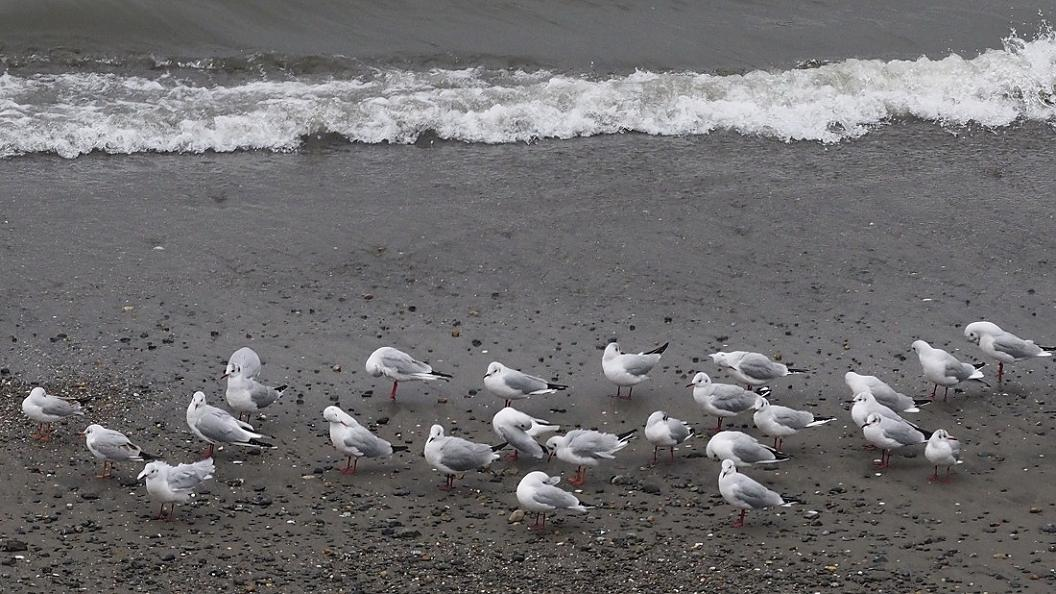 今 日 の 浜 辺 No.42_d0039021_18322777.jpg