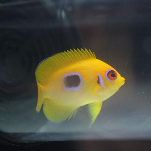 フィジー便海水魚!_d0221436_21545080.jpg