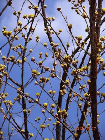 春がきた_a0220570_22362282.jpg