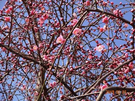 春がきた_a0220570_22365769.jpg