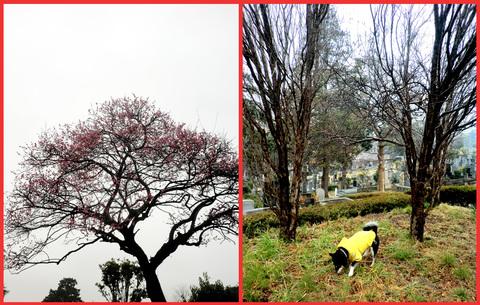 春は、きっと、「いろんなものを連れてくる」。_e0236072_23273743.jpg