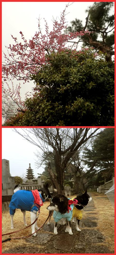 春は、きっと、「いろんなものを連れてくる」。_e0236072_23315317.jpg