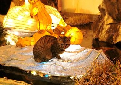 ランタンフェスティバルのお仕事猫_c0193077_11535623.jpg