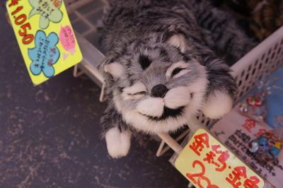 ランタンフェスティバルのお仕事猫_c0193077_11555888.jpg