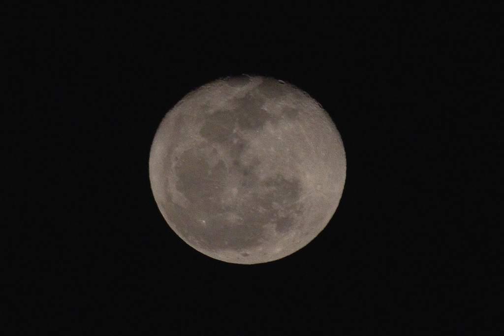 待ちに待った瞬間(アリスイがネコヤナギに)幻想的な色の月没/つるし雛/居待ち月_b0024798_21152522.jpg