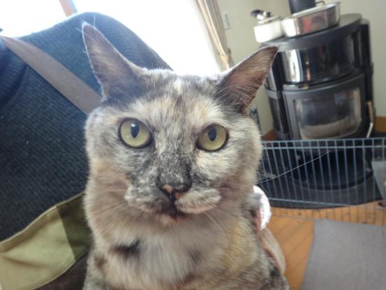 保護猫たちの暮らし_f0064906_17593712.jpg