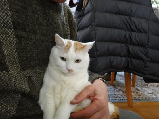 保護猫たちの暮らし_f0064906_18102188.jpg
