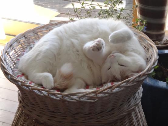 保護猫たちの暮らし_f0064906_18143280.jpg