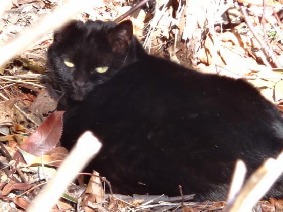 保護猫たちの暮らし_f0064906_18191477.jpg