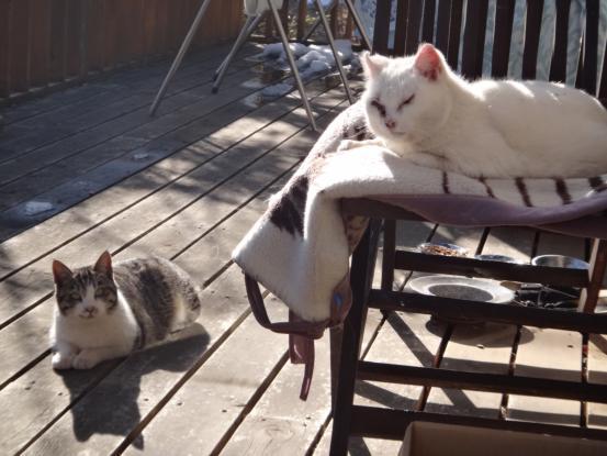 保護猫たちの暮らし_f0064906_1820926.jpg