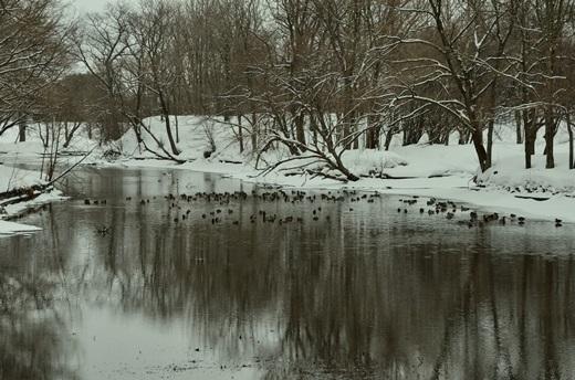 2013年2月28日(木):氷は緩むが雪は降る[中標津町郷土館]_e0062415_22172681.jpg