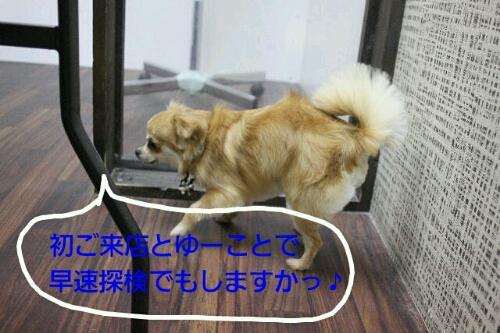 こんばんは!!!_b0130018_21502834.jpg