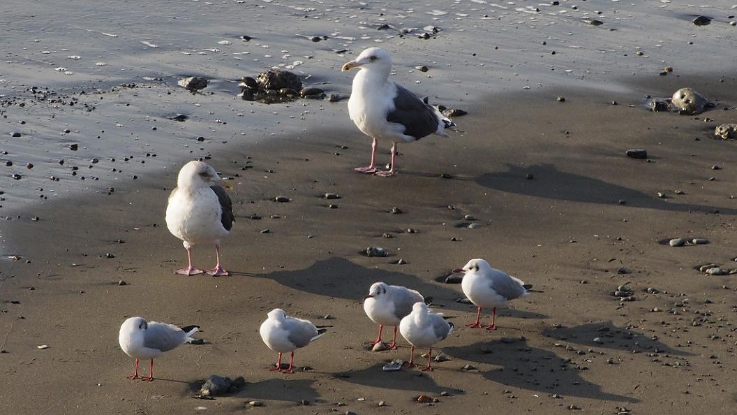 浜 辺 の 風 景 No.6_d0039021_18404665.jpg
