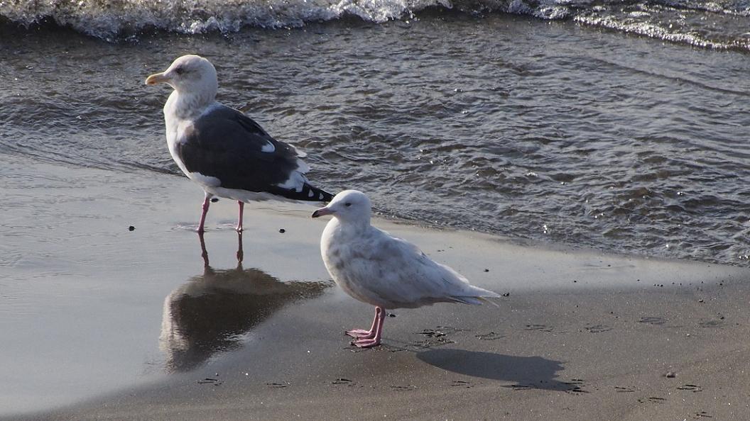 浜 辺 の 風 景 No.6_d0039021_18405217.jpg