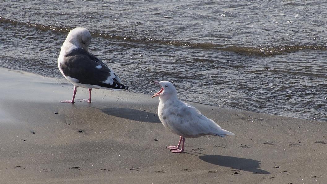 浜 辺 の 風 景 No.6_d0039021_18405853.jpg