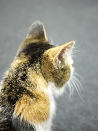 そと猫のお友だち でっちちゃん編。_a0143140_23583746.jpg