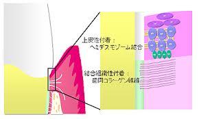 2013.02.26 院内勉強会_b0112648_10184053.jpg