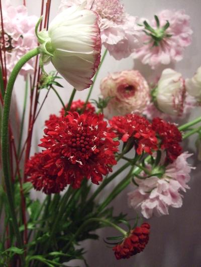 オークリーフ(赤×紫)_f0049672_17125084.jpg
