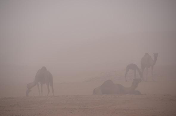 霧の中の母仔。_e0066474_1934961.jpg