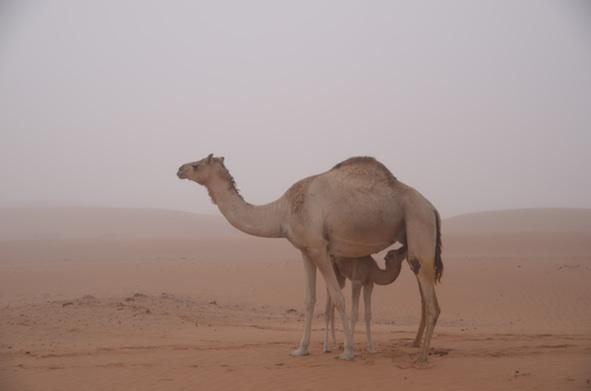 霧の中の母仔。_e0066474_19351989.jpg