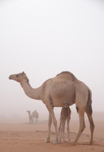霧の中の母仔。_e0066474_19383022.jpg