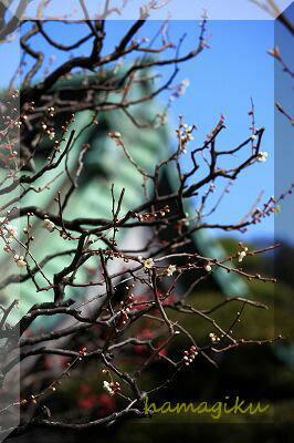 長谷寺の梅の花_e0305388_1629133.jpg