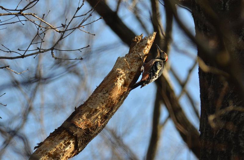 2月下旬 春の兆しは見つからず・・でも・・オオアカゲラ(^^)/_b0078795_18351153.jpg