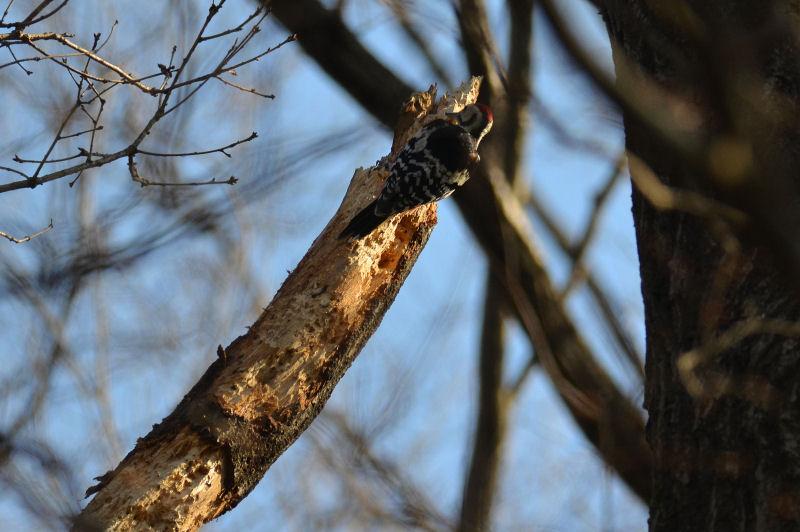 2月下旬 春の兆しは見つからず・・でも・・オオアカゲラ(^^)/_b0078795_18352481.jpg