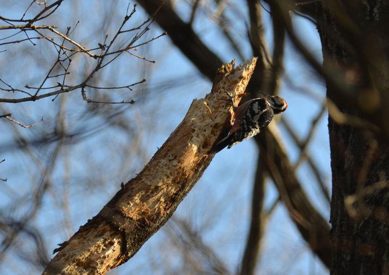 2月下旬 春の兆しは見つからず・・でも・・オオアカゲラ(^^)/_b0078795_183552.jpg