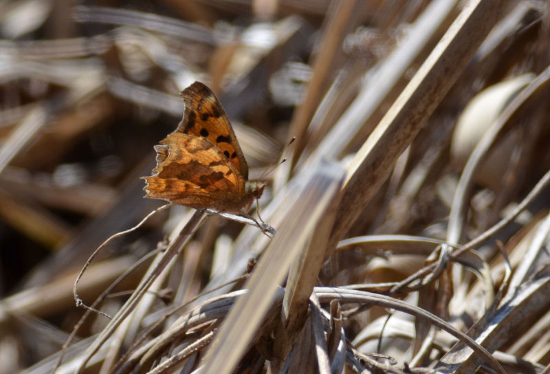 2月下旬 春の兆しは見つからず・・でも・・オオアカゲラ(^^)/_b0078795_1837507.jpg