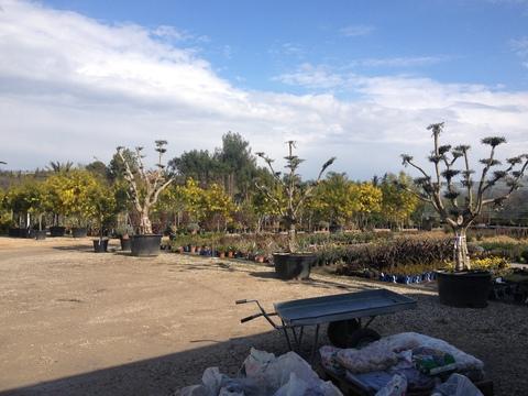 盆栽_a0255206_3211063.jpg
