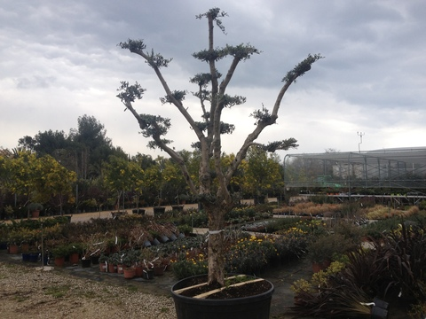 盆栽_a0255206_3235047.jpg